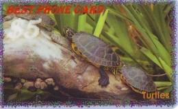 Télécarte * USA  (2371) TORTUE * TURTLE *  Phonecard * SCHILDKRÖTE * TELEFONKARTE - Turtles
