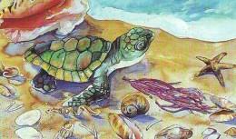 Télécarte * USA  (2380) TORTUE * TURTLE *  SHELLS *  Phonecard * SCHILDKRÖTE * TELEFONKARTE - Turtles