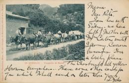 T.171.  Massa Carrara - IN VERSILIA - Trasporto Di Marmi - 1900 - Massa