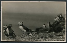 GB Puffin Island, Anglesey Postcard - Timperley - 1902-1951 (Kings)