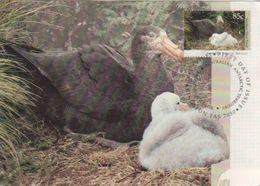 Australian Antarctic Territory 2017 Postally Used Maximum Card,Wildlife,Northern Giant Petrell - Maximum Cards