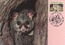 Australia 2017 Postally Used Maximum Card,sent To Italy,1992 Australain Wildlife,Common Brushtail Possum - Maximum Cards