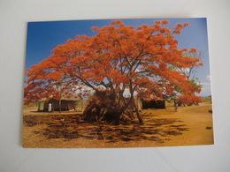 Postcard Postal Malawi - Malawi