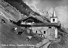 """07424 """"(AO) VALLE DI RHEMES - CAPPELLA DI MELIGNON"""" MUCCHE, VERA FOTO, FOT. BERARD, S.A.C.A.T. TIMBRO. CART NON SPED - Italia"""