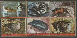 AJMAN - MNH - Animals - Birds - Insects - Beetles - Pájaros