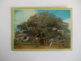 Postcard Postal Zimbabwe Rhodesia Baobab Largest Of African Trees - Zimbabwe