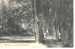 Bruxelles - CPA - Tervuren - Avenue Des Charmes - Tervuren
