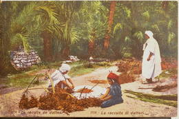 Tunisie, 1910, La Récolte De Dattes, La Raccolta Di Datteri, Animée - Tunisie