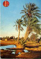 Chauds Reflets A L'oasis - Formato Grande Viaggiata – E 4 - Cartoline