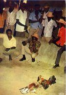 Haiti - Combat De Coqs - Cock Fight - Formato Grande Non Viaggiata – E 4 - Cartoline