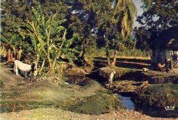 Haiti - Leogane - Formato Grande Non Viaggiata – E 4 - Cartoline