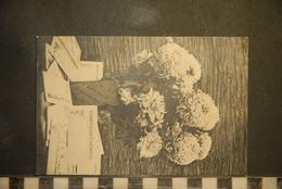 CP, Fleurs, Chrysanthemes - Fleurs