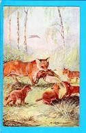Cpa Cartes Postales Ancienne - Illustrateur Renard - Illustrateurs & Photographes