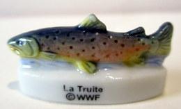 Fève Brillante - WWF - La Truite - Animals