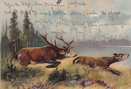 Jagd Chasse, Hunting,  Hirsch  Bock  Cerf  Et  Biches.   Old  Cpa. 1913 - Caccia