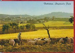 BETHLEHEM ISRAEL POSTCARD UNUSED - Israel