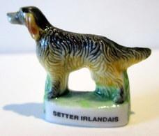 Fève Brillante - Setter Irlandais - Animals