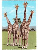 East Africa - Tanzania - African Wildlife - Giraffes - Giraffe - Animal - Nice Tanzania Uganda Kenya Stamp - Tansania