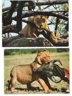 East Africa - 2 Cards - Kenia - Kenya - African Wildlife - Lion - Löwe - Animal - Nice Stamp - Kenia