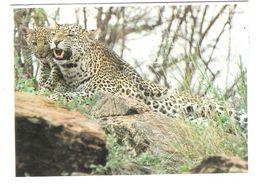 East Africa - Kenia - Kenya - African Wildlife - Leopard - Leopardo - Panthera Pardus - Animal - Nice Stamp - Kenia