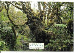 974 Ile De La REUNION La Forêt Primaire     *PRIX FIXE - La Réunion
