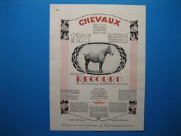 (1931) Chevaux REGOURD à Bordeaux - Vaches, Taureaux J. DARNAJOU à Savignac - Chiens, Chats LA MORINIÈRE à Anglet - Vieux Papiers