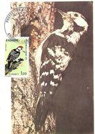 MC ANDORRA,  Woodpecker  / Carte De Maximum ANDORRE, Pic  1973 - Climbing Birds