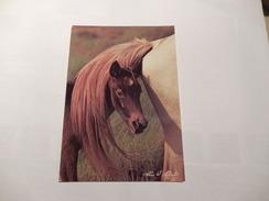 """Cheval  """"  Tete De Poulain Sous La Queue De La Jument  """"   Neuve  ( 17x11.5 ) - Horses"""