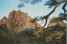 Postcard China Mountain Huangshan Rock Pine Tree - China