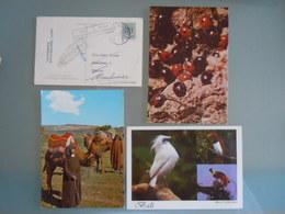 4 Postkaarten - Dieren