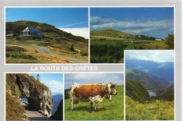 Vaches Animaux Vache Boeufs Veau Paturages Ferme Le Markstein Le Grand Ballon Le Col De La Schlucht Le Hohneck - Vaches
