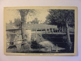 CPA 42 - ST ROMAIN LA MOTTE - AVENUE DE MAREUIL - SAINT ROMAIN LA MOTTE - Carte Vierge - LOIRE - Autres Communes