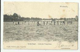 Westmalle   *  Abdij Der Trappisten - In Den Oogst  (Hoelen) - Malle