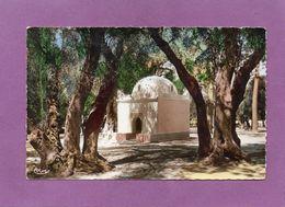 BLIDA - Bois Sacré, Marabout De Sidi-Yacoub - Blida