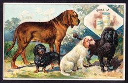 CHROMO Chocolat SUCHARD  Races De Chiens  Braque D'Angleterre Basset Caniche Poodle Hound Dogs Breeds Serie 82 - Suchard