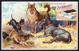 CHROMO Chocolat SUCHARD  Races De Chiens Terrier Ratier  Berger  Allemand  Dogs Breeds Serie 82 - Suchard