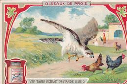 """CHROMO LIEBIG. OISEAUX DE PROIE. """" L'AUTOUR """". - Liebig"""