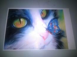 POSTACARD CATS  RP-1 - Gatos