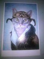 POSTACARD CATS  RP-2 - Gatos