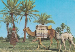 Postcard Tunisie Tunisia Skanes Monastir [ Camels ] My Ref B22303 - Tunisia