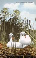 OREGON - Deschutes River Swans Nesting - Etats-Unis