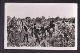 CPSM COTE D'IVOIRE - DIVO - Débroussage Dans Une Plantation De Café - TB PLAN ANIMATION Agriculture - Ivory Coast