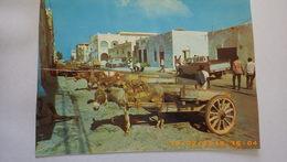 Rue De Djibouti. Attelages Avec ânes - Djibouti