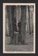 CPSM Pf. Dépt.27. LE LANDIN . Le Chêne à La Cuve .Fôret De Bretonne . - France