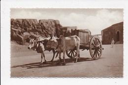 CARTE PHOTO ADEN YEMEN Attelage  ( Non Legendée) - Postcards