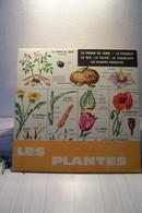 ECOLE - SCIENCES  - DEPLIANT SUR LES PLANTES - B. Flower Plants & Flowers