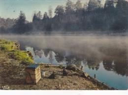 RANCE : Forêt Domaniale - Zonder Classificatie