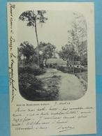 Bois De Mont-Saint-Aubert - Tournai