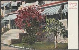 23 Foot High Poinsettia In California, C.1905 - Rieder Postcard - United States
