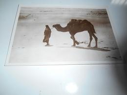 B680  Tripolitania Due Inseparabili Amici In Cammino Non Viaggiata - Cartoline